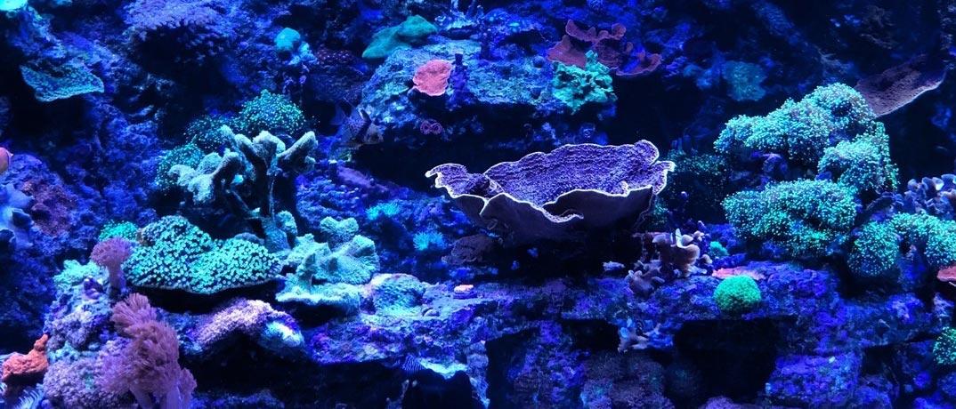 Aquarium MB