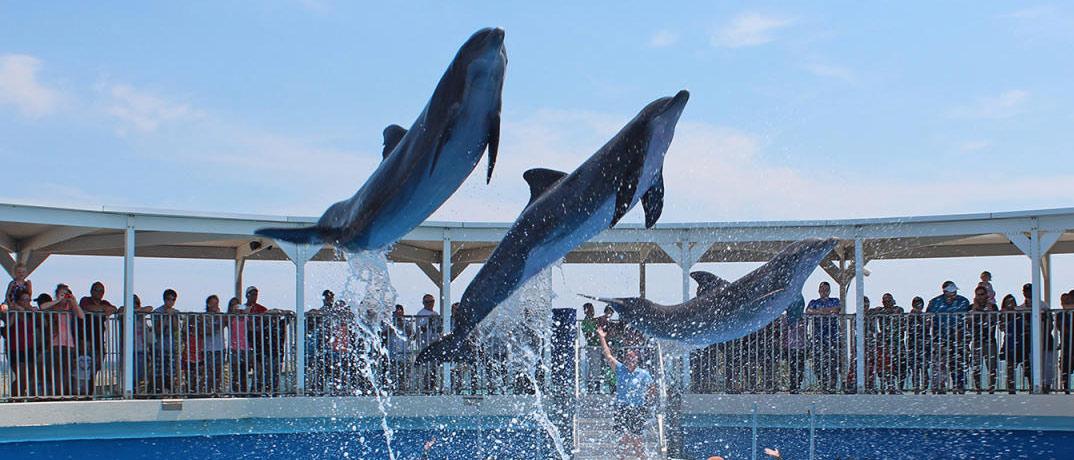 Gulfarium Marine Adventure Park located in Destin, Florida.