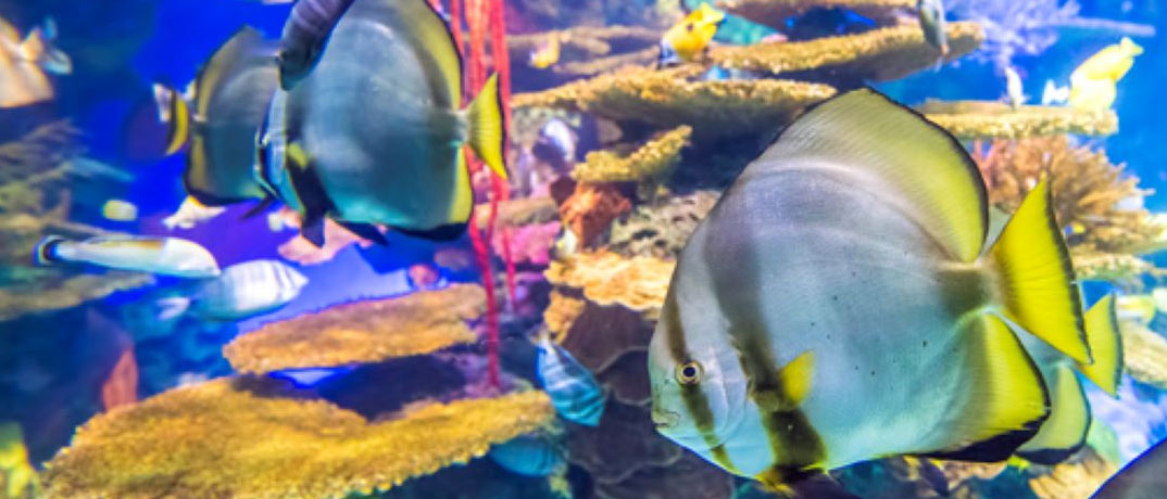 Rainbow Fish Ripleys