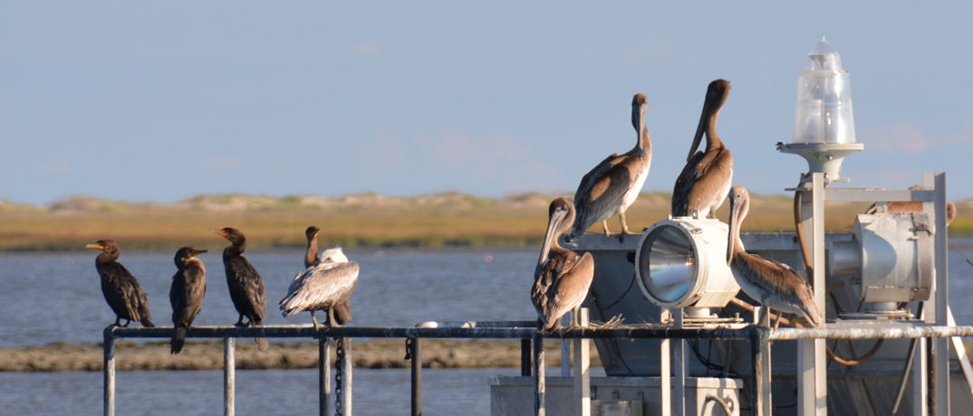What to do on Bird Island