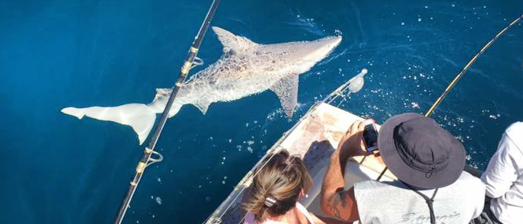 Shark Fishing Charter with Reel Deal Charters