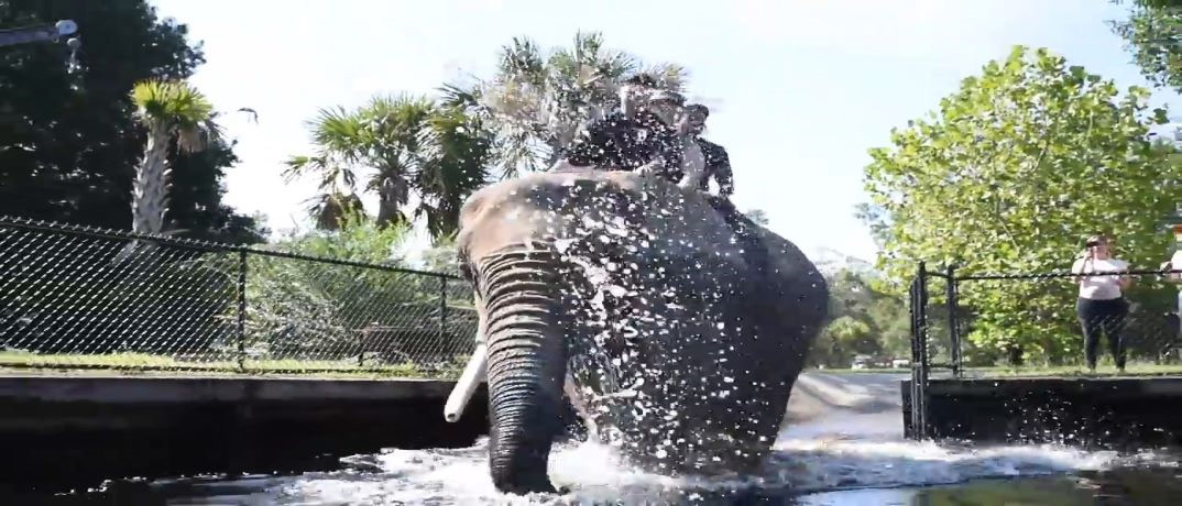 Bubbles the Elephant