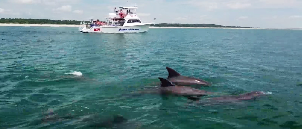 Express Watersports Dolphin Cruise