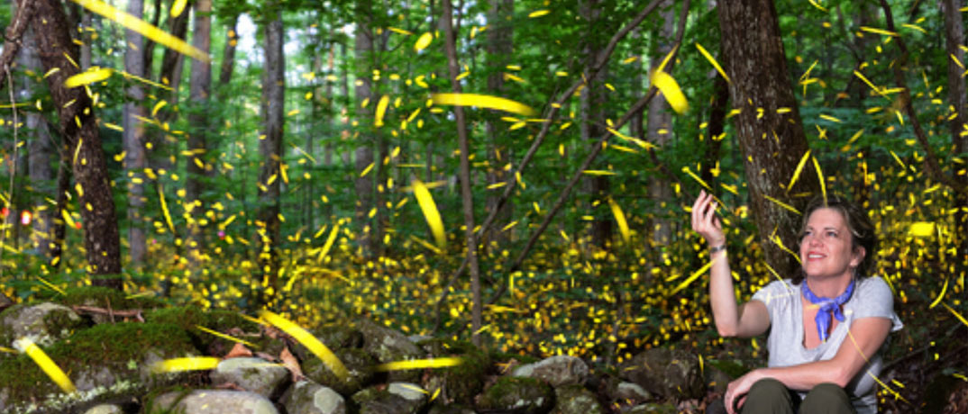 Fireflies in the Smokies