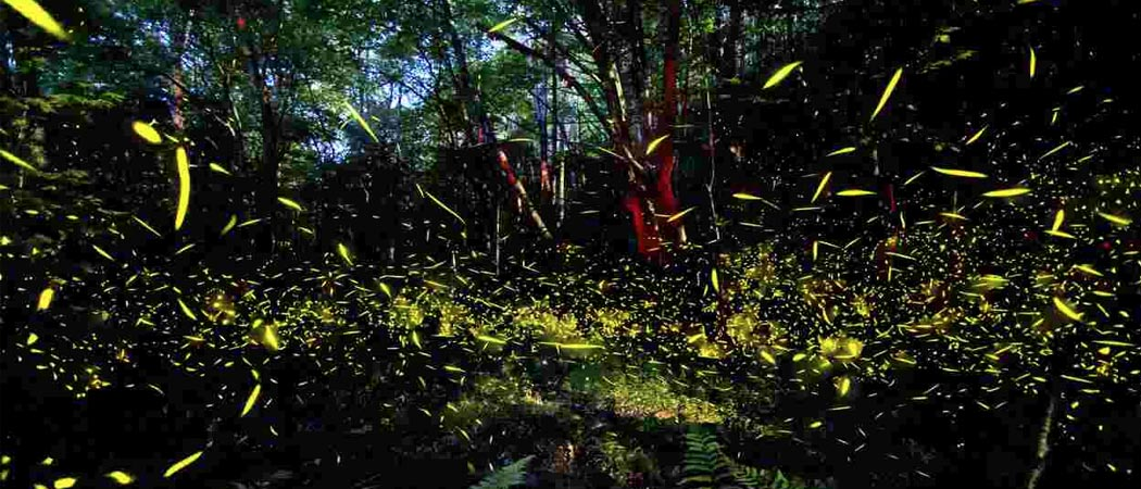 Fireflies in Pigeon Forge