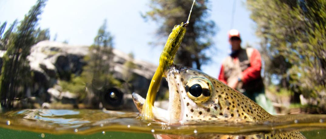 Fly Fishing and Trout Fishing