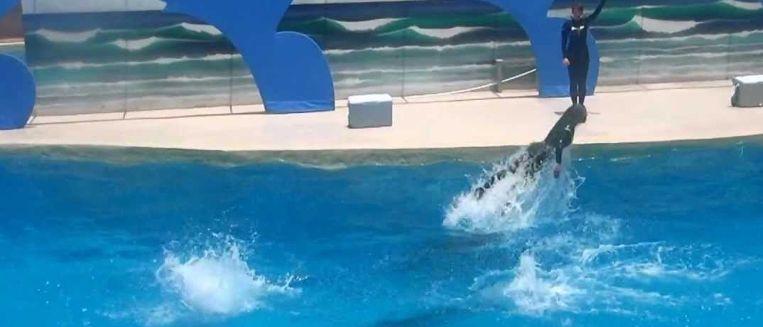 Gulf World Marine Park dolphin show Panama City, FL