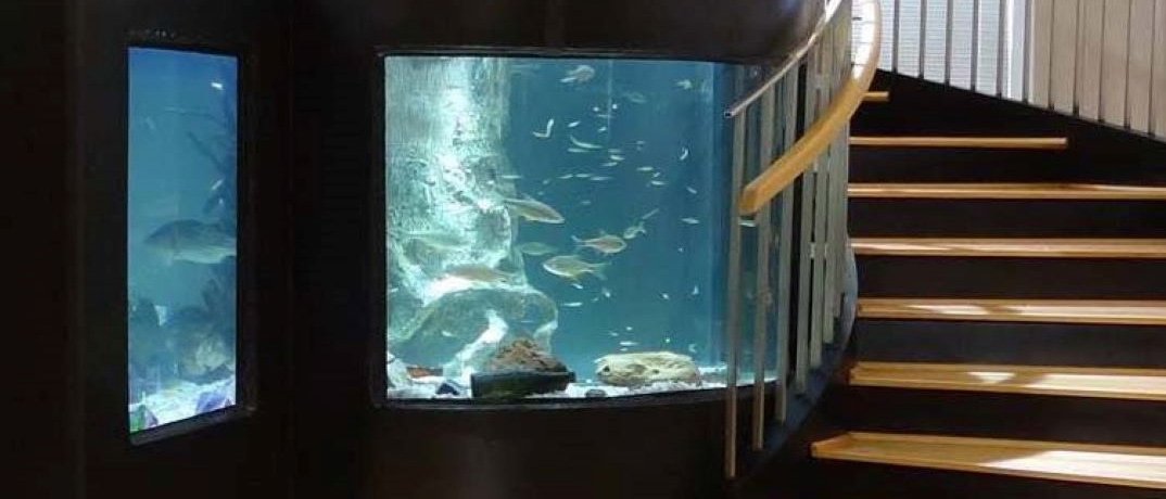 Horry County Fish Tank