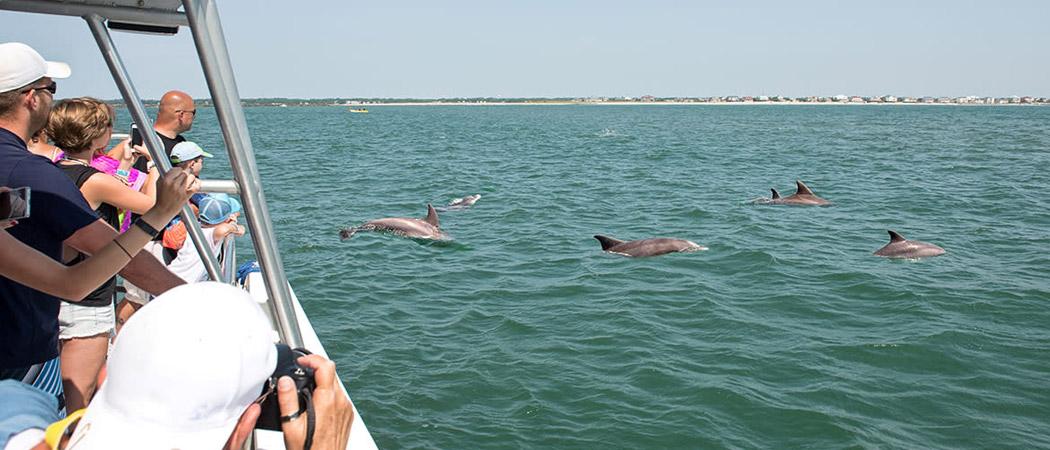 Hurricane Fleet Dolphin Cruise