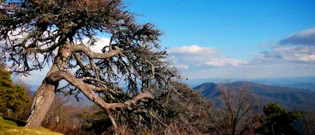 Licklog Ridge Overlook