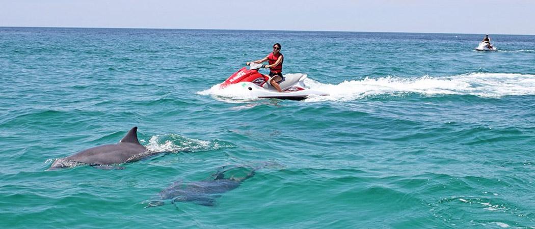 Myrtle Beach Watersports Dolphin Watching