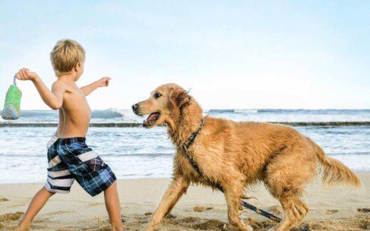 Pet Friendly Places in Myrtle Beach