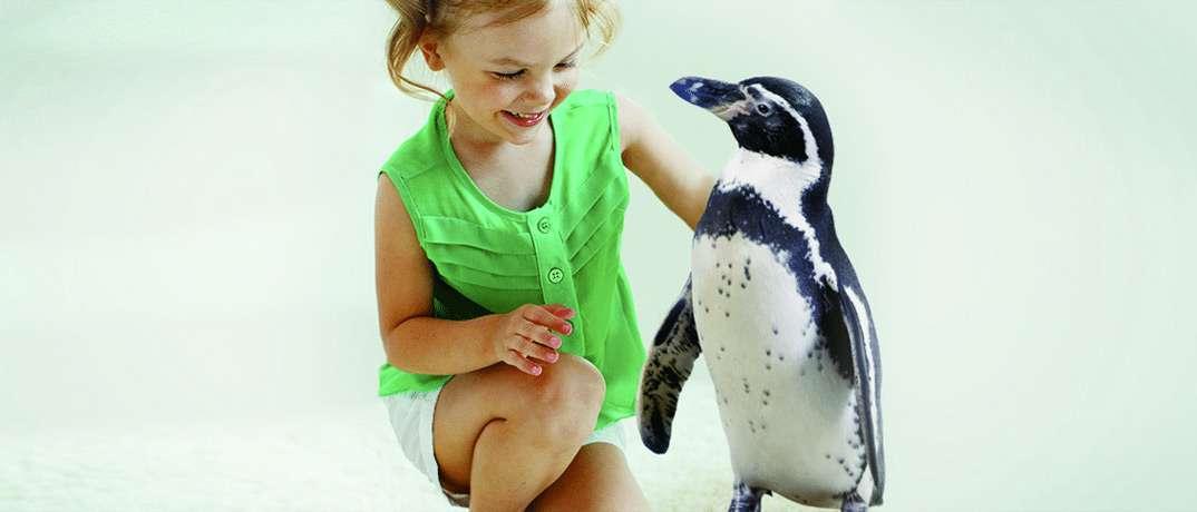 African Penguin Exhibit