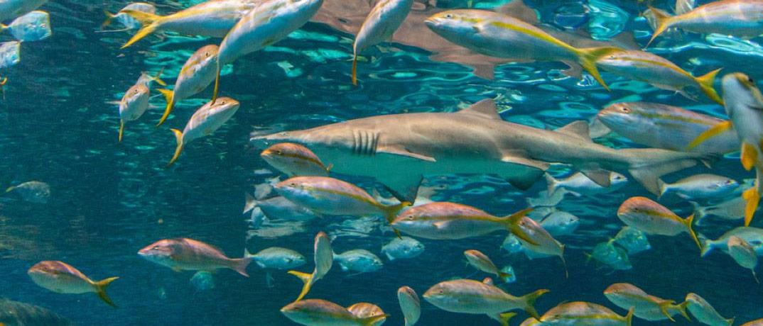 Gatlinburg, TN Shark Aquarium