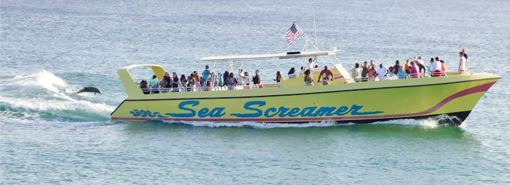 Sea Screamer Dolphin Cruise