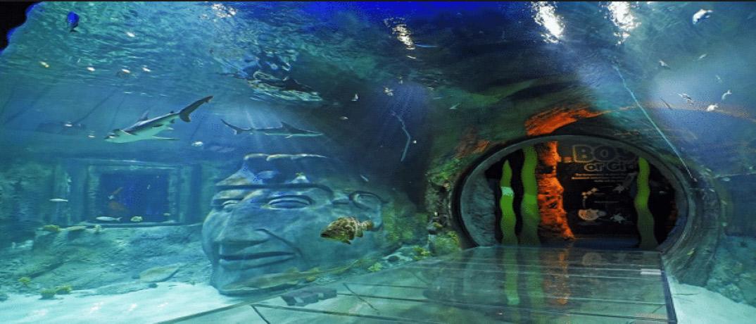 Sea Life Orlando