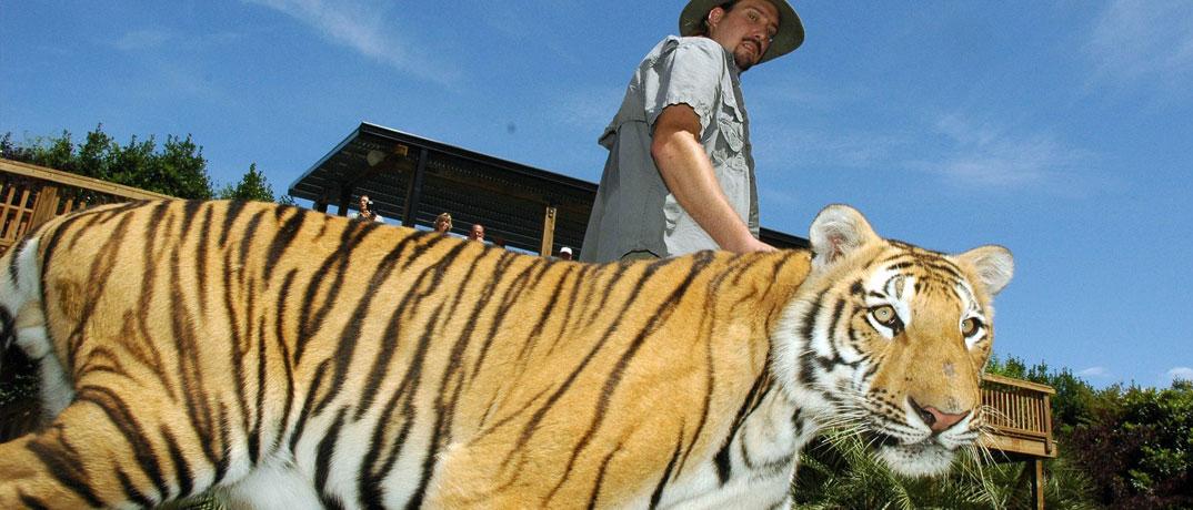 Tigers Preserve Myrtle Beach