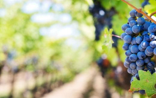 Gatlinburg Wine Tasting